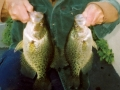 gallery-crappie003